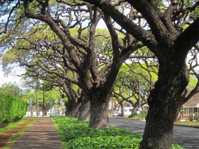 2012-hawaii-13