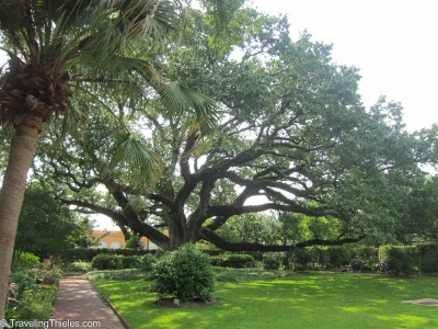 City botanical garden - beautiful spanish oaks