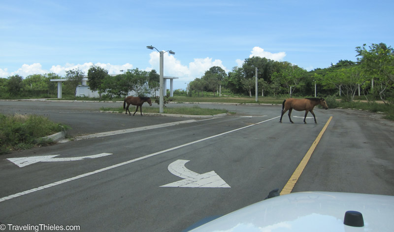 Horse crossing in abandoned parking lot