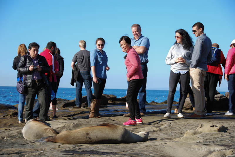 Tourists taking photos of seals